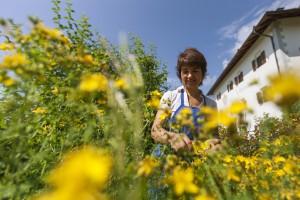 Im duftenden Kräutergarten, Copyright: Frieder Blickle Roter Hahn, Abdruck honarfrei
