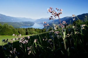Blumenwiese mit Aussicht auf den Millstätter See (c) Archiv MTG
