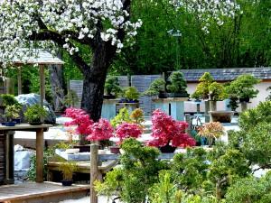 Bonsai Garten (c) Archiv MTG Kloesch