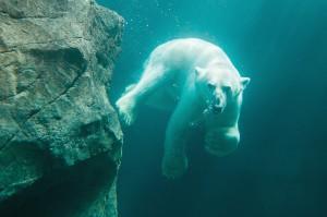 In der neuen Eisbärenwelt im Tiergarten Schönbrunn sorgt der Schöck-Isokorb für nachhaltige Wärmedämmung (c) Daniel Zupanc/Tiergarten Schönbrunn